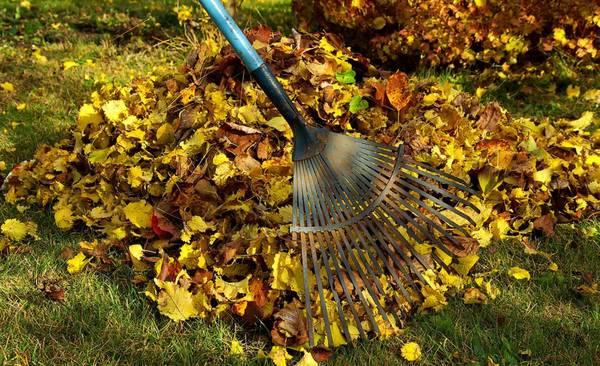 Viertolan siivoustalkoot la.30.10.2021 klo 10 alkaen